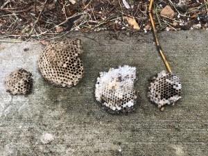 East Nashville - Wasp Nest Removal